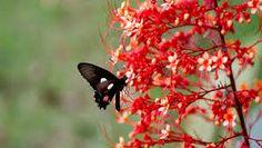 """Résultat de recherche d'images pour """"borboletas"""""""