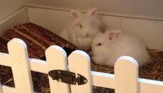 rabbit hutch3