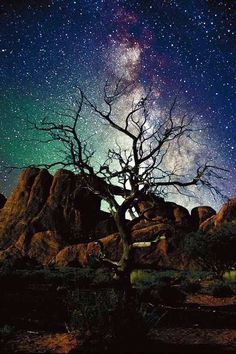 You can see the Milky Way Galaxy from Earth with the naked eyes. But I want to see it in the galaxy! Beautiful Sky, Beautiful World, Beautiful Places, Beautiful Pictures, Ciel Nocturne, Pantheism, Lone Tree, To Infinity And Beyond, Science And Nature