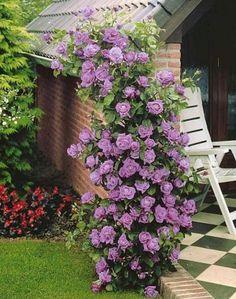 Плетистые и вьющиеся розы. Обзор сортов (фото) Container Flowers, Garden Design, Garden Landscape Design, Big Garden, Plants, Garden Trellis, Garden Decor, Garden Decor Projects, Growing Flowers