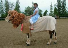 WTF?! 12 Horses With Better Costumes Than You via Brit + Co.