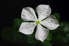 Fantastic Flower Macro. Stunning Details!