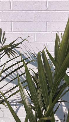 - Photography, Landscape photography, Photography tips Iphone Wallpaper Vsco, Plant Wallpaper, Phone Screen Wallpaper, Summer Wallpaper, Love Wallpaper, Aesthetic Iphone Wallpaper, Nature Wallpaper, Mobile Wallpaper, Aesthetic Wallpapers