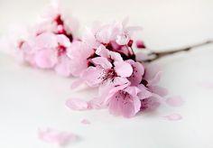 Flor del ciruelo  by Irina Novosyolova on 500px