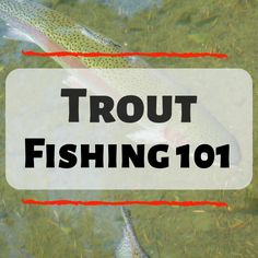 102 Best Trout Fishing 101 images in 2019