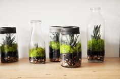 Crown Flora Studio on Queen Street - Terrarium