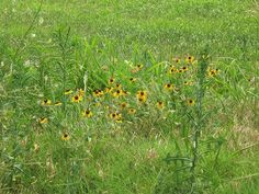 oklahoma wildflower landscape | Oklahoma Wildflowers 2009