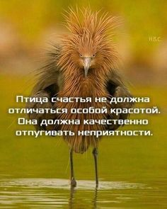 Новости - МирТесен Funny Animal Photos, Funny Pictures, Russian Humor, Brainy Quotes, General Quotes, British Humor, Funny Phrases, Clever Quotes, Cool Art Drawings