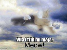 Heavenly Cat