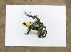 the mimic dart frog Original Giclee by EllenJewettPrintShop