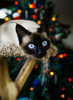 Pretty blue eyes and Christmas lights. ...