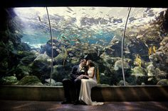 beautiful aquarium wedding inspiration