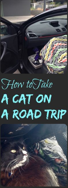 Sometimes you have to take a cat that hates cars on a road trip. When that time comes, here are some tips to help make the journey better for both of you.