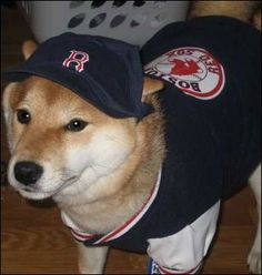 7e68144cdf1 89 Best RemDawgs Dogs of Red Sox Nation (and other places) images ...