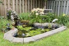 water garden, pond