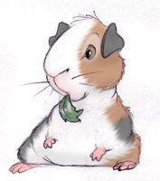 Guinea Pig by ShoJoJim
