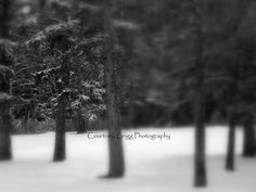Winter Trees Photography Cards Series set of 4 by courtneygrigg, $11.00 #winter #snow #tree #trees #Montana #Bozeman #photo #nature #landscape #blackandwhite