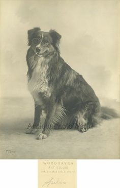 Dog in glasses smoking pipe antique art photo by ArtNotch on Etsy, $135.00