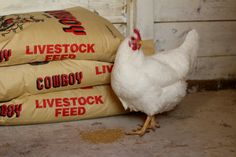 Sometimes it's painful going to the feed store. This post will show you 15 ways to save money on chicken feed!