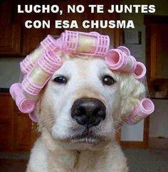Jjaja No te juntes con esa chusma #Perro #Gracioso #Divertido