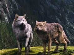 giant wolf - Google Search