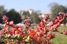 """© Maurizio Maniscalco #CastellodiMasino #parco Evento """"Tre giorni per il giardino"""""""