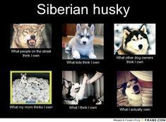 Siberian Husky -all so true..