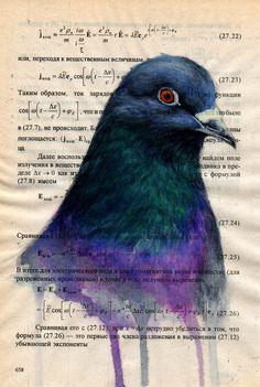 Urban Pigeon Painting  - Urban Pigeon Fine Art Print