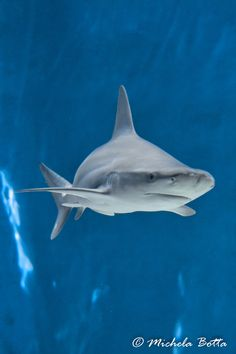 Shark by Michela Botta on 500px