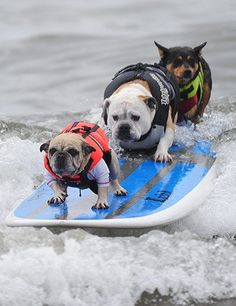 """'Surfing Dogs.' ~ Rear Dog Says ~ """"Okay Guys, hang on!  There's a BIG wave fast approaching..."""""""