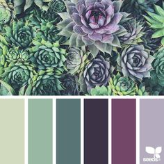 today's inspiration image for { succulent hues } is by @suertj ... thank you, Sue, for another amazing #SeedsColor image share!