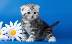 """Képtalálat a következőre: """"cica virággal"""""""