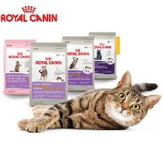 Royal Canin Coupon – Free Cat Food
