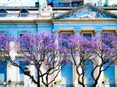 Buenos Aires is often called the Paris of South America, and it's easy to see why in neighborhoods like Recoleta. Here you'll find grand mansions, a famously ornate cemetery, and tons of French architecture (like the French Neo-classic Museo Nacional de Arte Decorativo, pictured)