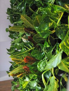 Green Walls @ Cabinet de Avocatura Green Walls, Plant Leaves, Cabinet, Plants, Clothes Stand, Closet, Cupboard, Planters, Plant