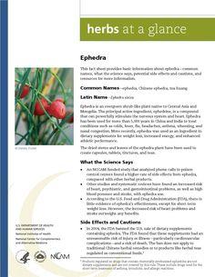 Ephedra. Full document available at http://nccam.nih.gov/health/herbsataglance.htm