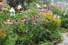 2014年夏の荒れ地ガーデン