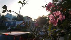 Flores na beira da estrada.