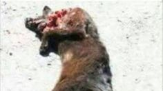 Petition · Prohibit torture and kill cats· Change.org