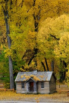 Quaint little house or cabin in the woods.
