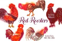 Red Watercolor Roosters Graphics Red Watercolor Roosters. Hand painted watercolor clip art.Elegant watercolor Roosters perfect for by Nataliapiache