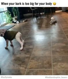 Too much bark, not enough butt 😂 (🎬 @toddandsophie_boxers) Funny Dog Pictures, Boxers, Funny Dogs, Puppies, Photo And Video, Instagram, Funny Dog Photos, Cubs, Boxer