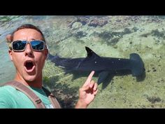 Almost Swam With Giant HAMMERHEAD SHARK! - YouTube