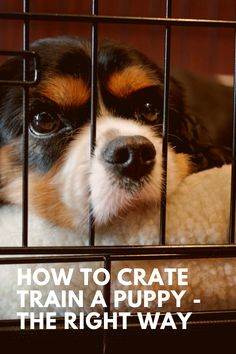 Crate training can be an extremely efficient tool when house training your dog and avoiding unwanted behaviors around your house. Learn how to train your dog to love his crate here! #dogtraining #dogtrainer #puppytraining #crate #puppylove #puppies #doglover #pup #crates #dog Puppy Training Classes, Training Your Puppy, Small Puppies, Small Dogs, Dog Separation Anxiety, Dog Health Care, Crate Training, Dog Crate, New Puppy