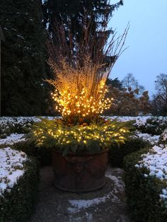 Traditional Landscape Lighting, Dried Flowers, Blue Flowers, Twig Centerpieces, Twig Lights, Sweet Woodruff, Winter Planter, Faux Grass, Spring Flowering Bulbs