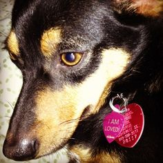 WHAT'S ON YOUR DOG TAG?