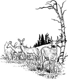 Deer Scene : Rubber Art-Stamps : Decorative Rubber Stamps : The Stampin' Place Wood Burning Stencils, Wood Burning Crafts, Wood Burning Art, Animal Sketches, Animal Drawings, Art Drawings, Pyrography Patterns, Wood Carving Patterns, Deer Stencil