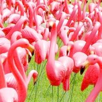 Pink Flamingo Day was declared in 2007 by Dean Mazzaralla, the mayor of Leominster, MA. This was done to honour the work of Don Featherstone, creator of the plastic lawn flamingo. The original pink plastic flamingo which was designed by Don was made in the USA by Union Products until production ceased in 2006.