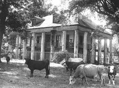 Really cool photos of Louisiana plantations