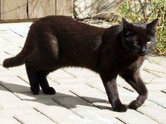 Schwarze Katze im Hinterhof